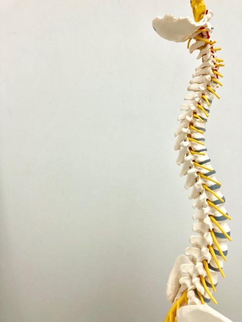 背骨がねじれを伴って横に曲がる疾患